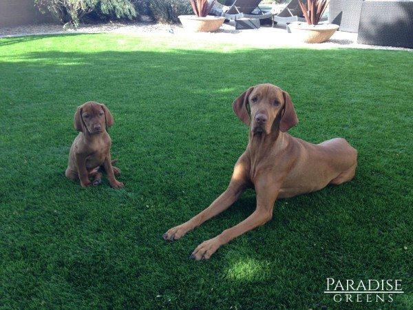 Pet-friendly Grass at McDowell Mountain Ranch in Scottsdale, AZ