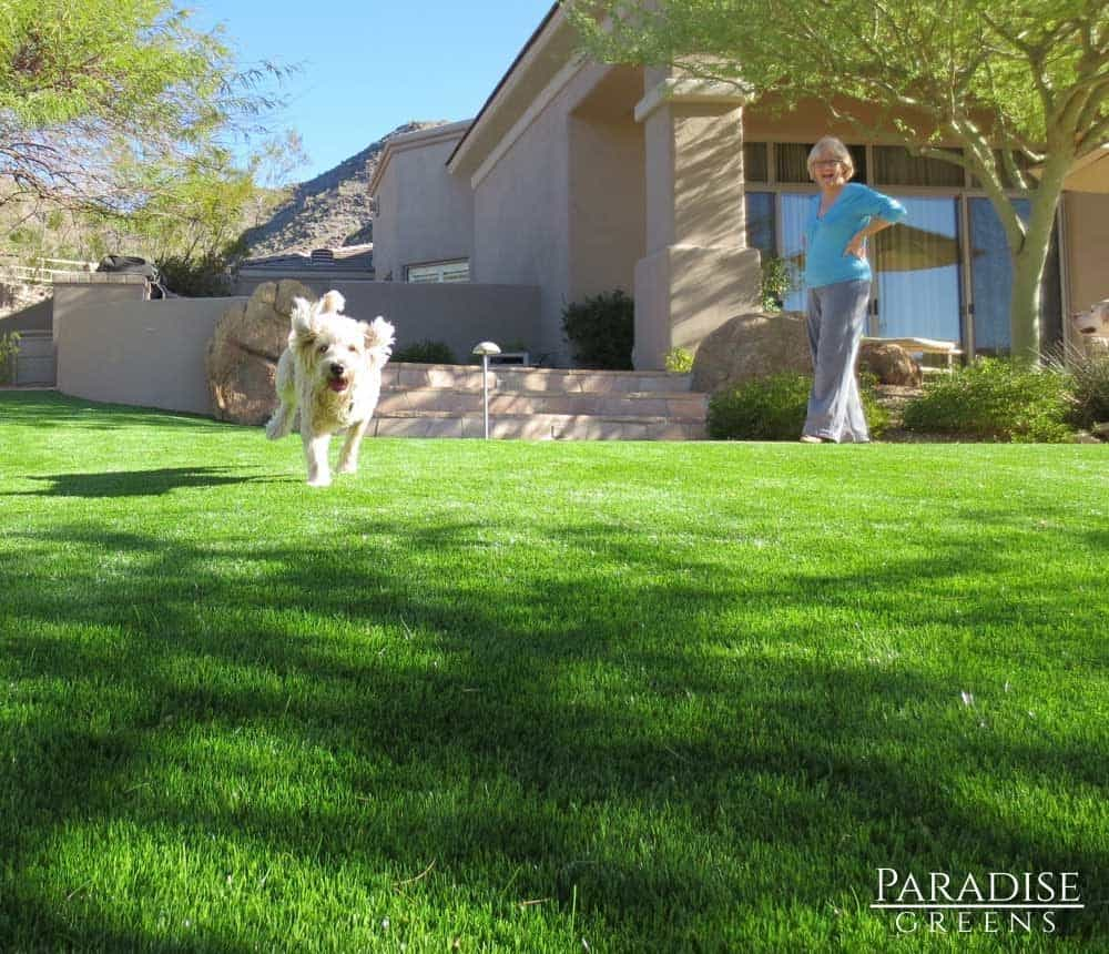 artificial-turf-that-is-safe-for-pets