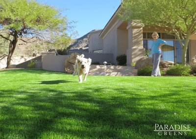 Artificial Turf for Pets in Scottsdale