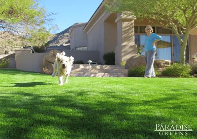 Artificial Pet Friendly Lawn in McDowell Mountain Ranch in Scottsdale, AZ