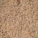 Dead Bermuda Grass
