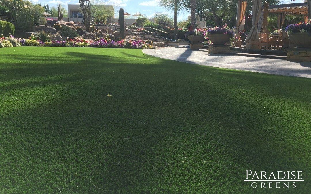 Artificial Turf at Camelback Inn Resort in Paradise Valley, Arizona